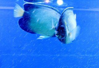 アクアリウムの災害対策!もしもの時、熱帯魚や水槽をどうすればよいのか