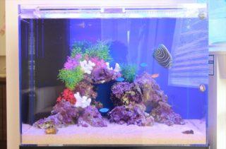 【プロがすすめる】海水魚飼育におすすめのエサ(餌)ベスト10