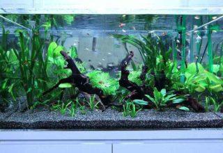 二酸化炭素CO2の添加が必要な水草!きれいでおすすめな種類10選