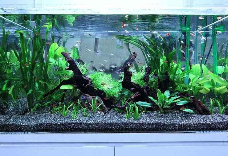 Co2 なし 水草 キューバパールグラスの植え方・育て方・増やし方、Co2なしの場合 販売・通販・購入・アクアリウム