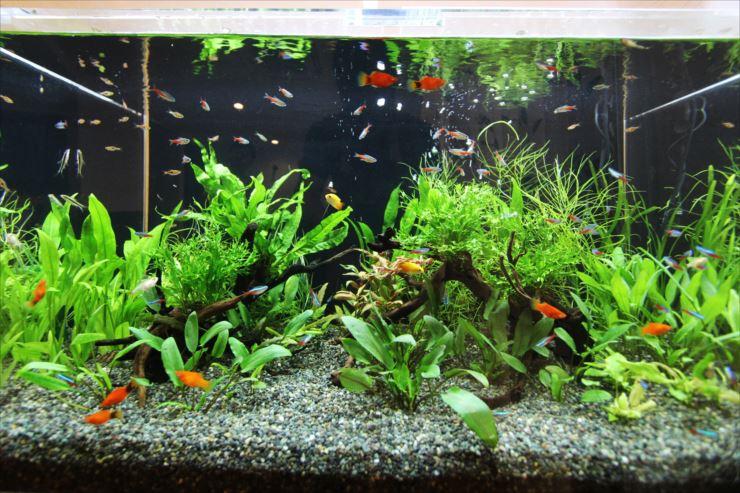 黒×白 緑×赤 二つの対照色効果で、立体的な水中風景をつくる!