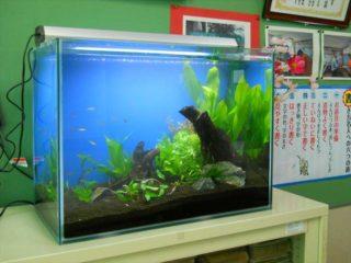 【プロがすすめる】水槽バックスクリーンのおすすめ人気商品ベスト10を紹介!
