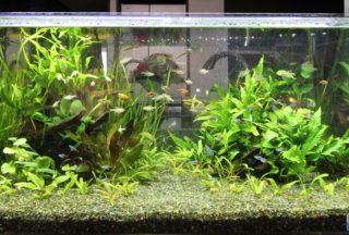 【初心者向け】熱帯魚の種類を分かりやすく分類します!おすすめも紹介!