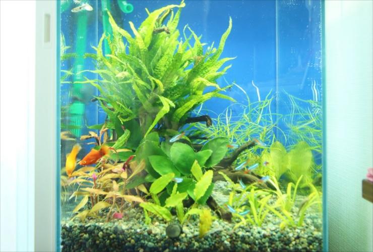 熱帯魚飼育を通じて、水槽レイアウトから美術的な知識を得ることができる