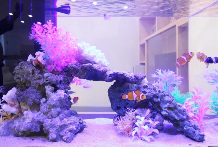 熱帯魚飼育が情操教育に役立つ! その理由とは?