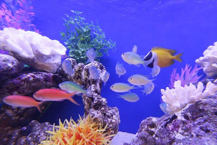 熱帯魚の色映えをよくし、熱帯魚水槽をおしゃれに見せるには?