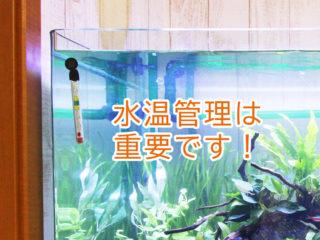 水温管理は重要です!熱帯魚水槽におすすめの水温計ベスト5