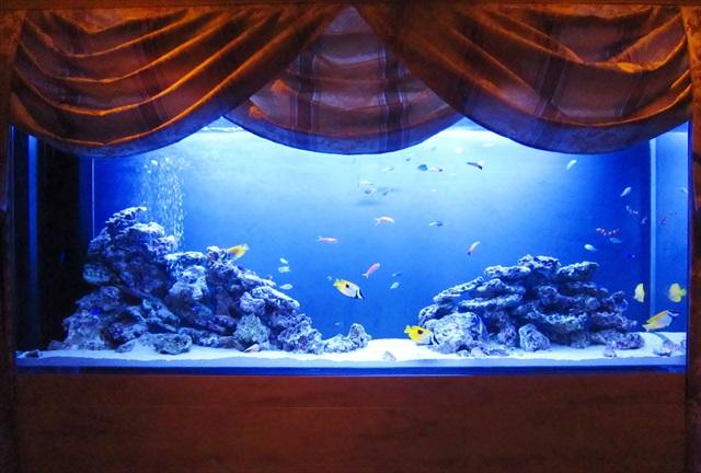 熱帯魚が映える! 水槽用の照明の選び方