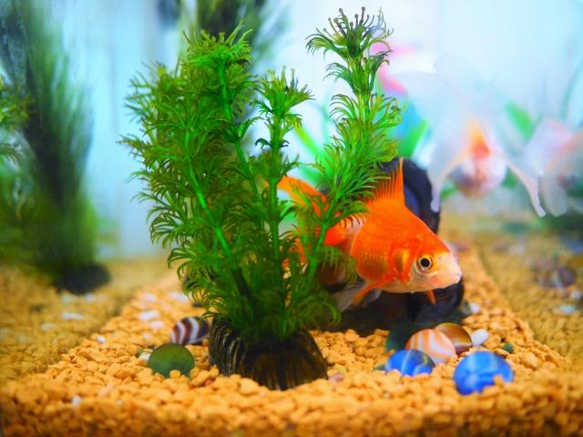 まとめ・【初心者向け】おすすめ金魚水槽セット10選をご紹介!選び方も教えます!
