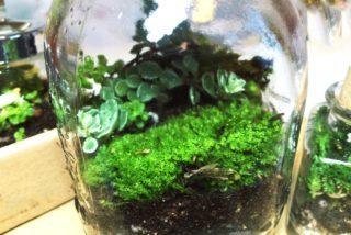 【完全解説】テラリウムとは!作り方、おすすめの動植物、水槽まで紹介!