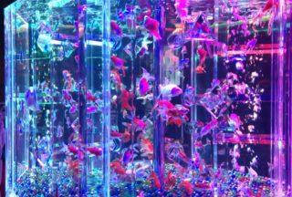 【金魚アートの魅力とは】アートアクアリウム2018に行ってきました