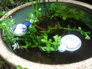 夏の大型台風対策とは!? 屋外飼育のメダカやエビを守る方法を徹底解説!