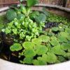 ビオトープは睡蓮鉢で決定! メダカや金魚におすすめな睡蓮鉢の種類別15選