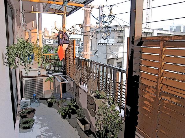 まとめ・アクアリウム水槽の夏の大型台風対策! 屋外飼育のメダカやエビを守る方法を徹底解説!