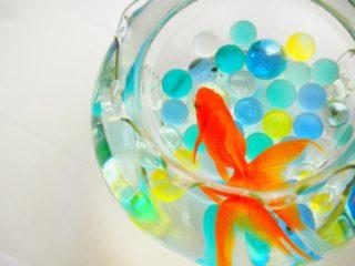 【初心者向け】おすすめ金魚水槽セット10選!選び方も教えます!