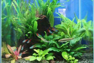 熱帯魚の栄養と健康を考える・栄養価の高い餌ベスト5と魚にあった餌の選び方