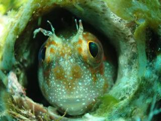 【画像】かわいい魚を集めました 愛嬌たっぷりの熱帯魚15選