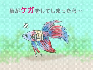 怪我をしてしまった魚の治療方法!薬や消毒、回復期の手当てまで解説します