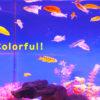 【体色がきれいな熱帯魚】おすすめベスト10を魚のプロがご紹介します