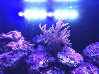 水槽用の水中LEDでおすすめ商品ベスト5!効果や注意点も