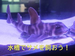 自宅でサメが飼える!?飼育可能なサメの種類と飼いかたのポイントをご紹介