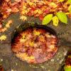 秋を感じさせるレイアウト!自宅の水槽に秋を取り入れる方法とは!