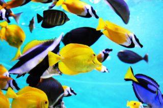 【初心者向け】淡水魚と海水魚どっちを飼育する?値段や難易度の違いとは?