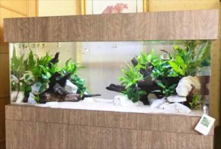 水槽上部カバー(キャノピー)とは!インテリア効果や遮光効果など特徴を解説!