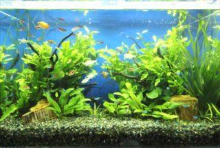 【おすすめの中景草ベスト10】中景草で用いる水草のレイアウトや種類も紹介