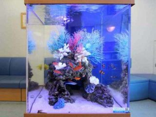 小型水槽で海水魚を飼ってみよう!おすすめ商品と飼いやすい魚を紹介!