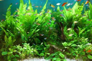 【プロ愛用!】熱帯魚水槽のコケを抑制する吸着剤の種類と効果、使用方法を解説