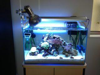 海水魚で人気のある小型ヤッコ! 種類と飼育方法まで徹底解説します