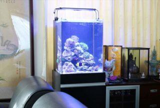 システムLEDとは?スマホで照明を管理して、熱帯魚飼育を楽しもう!