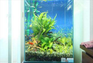 ハイタイプ水槽の魅力!おすすめ水槽と照明・フィルターまでご紹介!