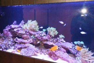 サンゴ水槽はLED照明で!おすすめのLED5選と夜間照明について
