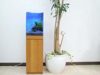 アクアリウムと観葉植物のレイアウト事例!おすすめの植物もご紹介します