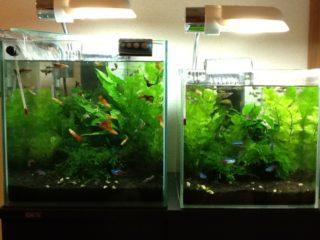熱帯魚が増えると水槽も増える!増殖させないために初心者が注意すべきこと
