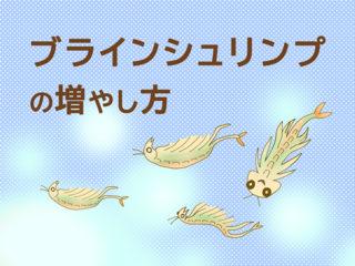小さな魚の餌!ブラインシュリンプの孵化と増やし方・魚への与え方を解説