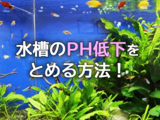 水槽のpH低下が止まらない。プロが実践するpH管理と上昇させる方法