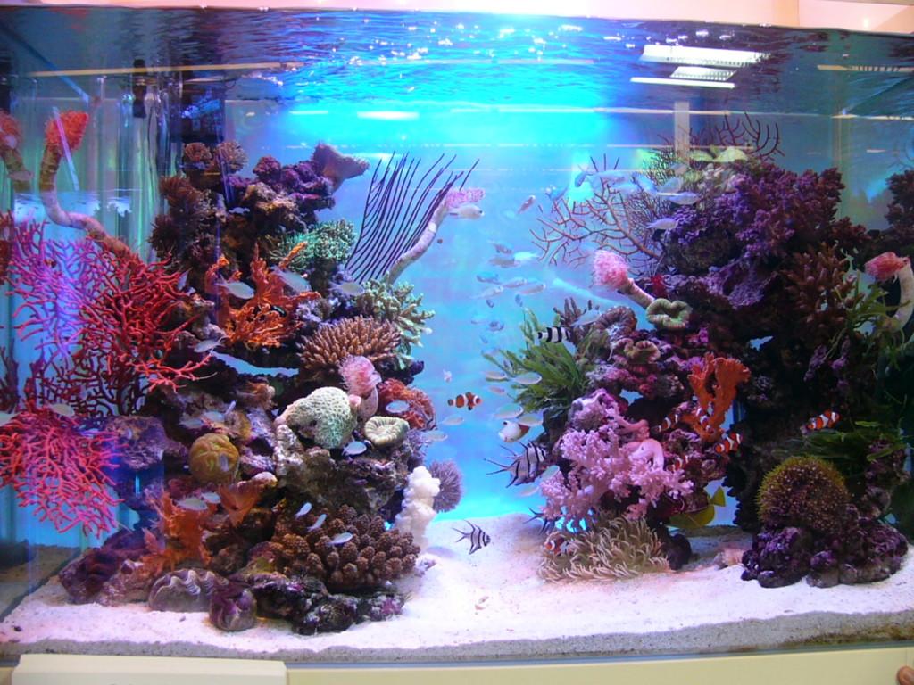 自作のバックスクリーンを熱帯魚水槽に貼ってみよう!メリットとポイント