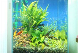 水草水槽に魚は必要?水草育成に最適なろ過システム・生体の種類とは