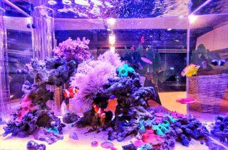 プロが選ぶ!海水60㎝水槽におすすめな海水魚の組合せかたを解説します