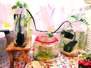 ボトルアクアリウムの冬の保温術!ベタなどの熱帯魚や水草を寒さから守る
