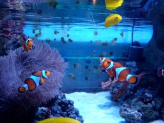 海水魚水槽の混泳!アクアガーデンが採用する組み合わせお教えします