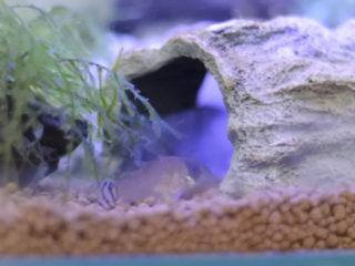 魚がでてこない!熱帯魚が流木や水草の影に隠れてしまうときの対処法