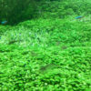 水草のみでレイアウト!本格的な水草水槽の作り方・配置のポイントとは