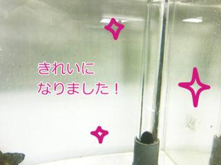オーバーフロー水槽の掃除方法!フロー管、3重管をきれいにする方法とは