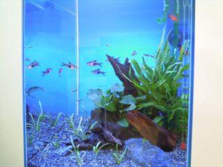 熱帯魚の生き餌・冷凍餌を比較!食いつきが良く、適したエサを考えます!