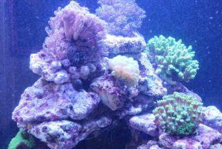 サンゴとイソギンチャクはどこが違う?それぞれの特徴をプロが解説します