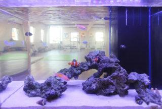 毎日餌をあげているのに、水槽の熱帯魚が餓死!?~アクアガーデン事件簿~